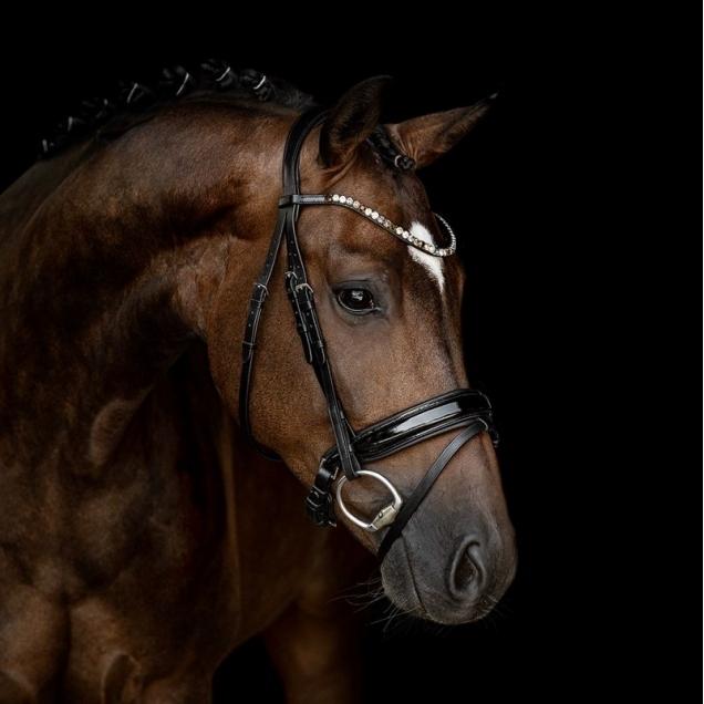 Pferde Trensen und andere Zäume von My Unicorn